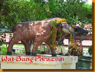 A Bull with magic symbols in Wat Bang Phra